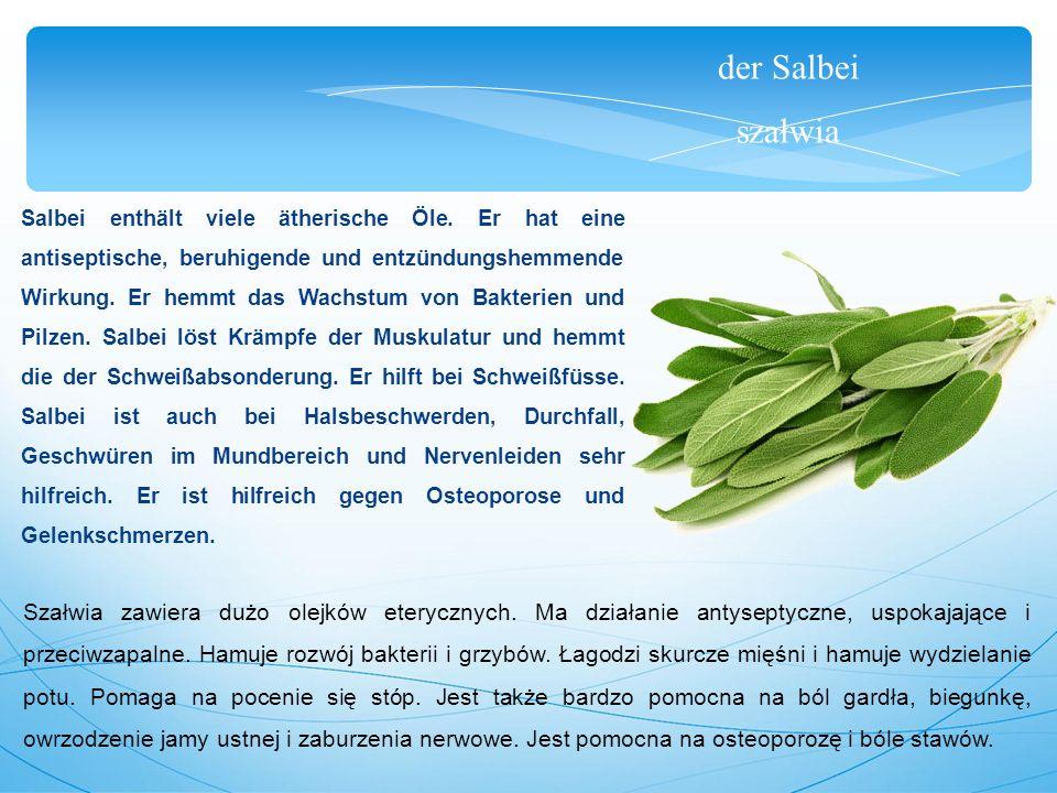 der Salbei szałwia Salbei enthält viele ätherische Öle.