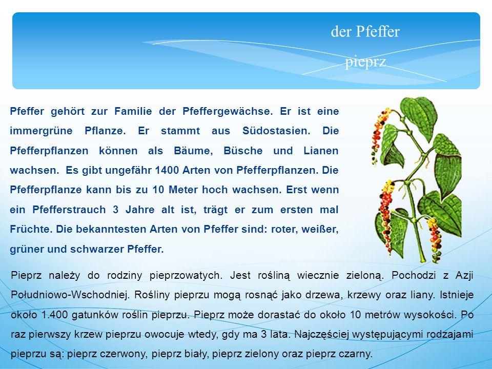 der Pfeffer pieprz Pfeffer gehört zur Familie der Pfeffergewächse.