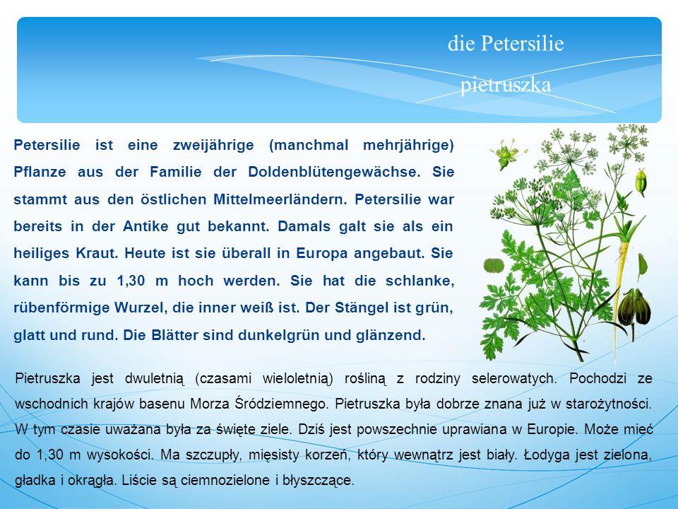 die Petersilie pietruszka Petersilie ist eine zweijährige (manchmal mehrjährige) Pflanze aus der Familie der Doldenblütengewächse.