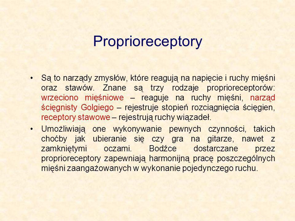 Proprioreceptory Są to narządy zmysłów, które reagują na napięcie i ruchy mięśni oraz stawów. Znane są trzy rodzaje proprioreceptorów: wrzeciono mięśn