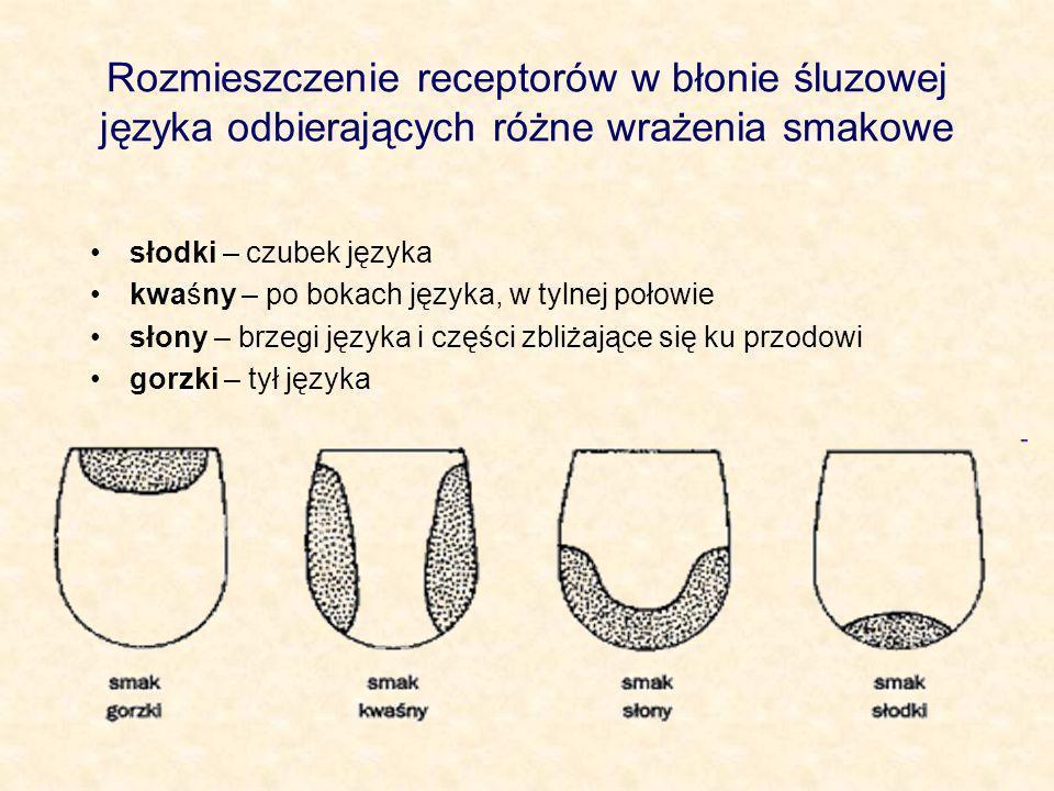 Rozmieszczenie receptorów w błonie śluzowej języka odbierających różne wrażenia smakowe słodki – czubek języka kwaśny – po bokach języka, w tylnej poł