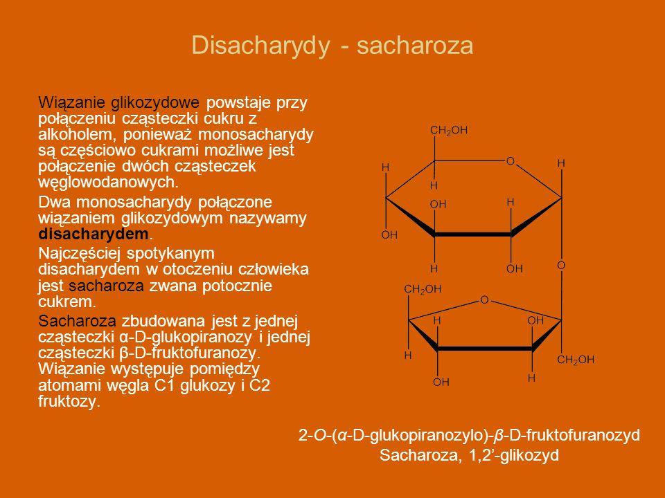Disacharydy - sacharoza Wiązanie glikozydowe powstaje przy połączeniu cząsteczki cukru z alkoholem, ponieważ monosacharydy są częściowo cukrami możliw