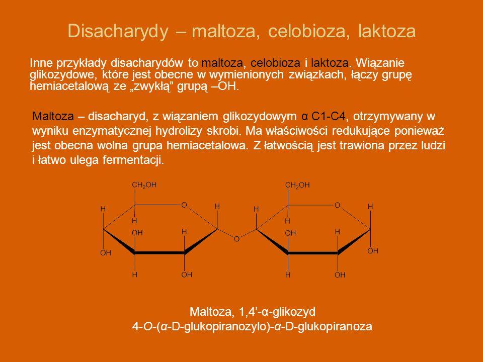 Disacharydy – maltoza, celobioza, laktoza Inne przykłady disacharydów to maltoza, celobioza i laktoza. Wiązanie glikozydowe, które jest obecne w wymie