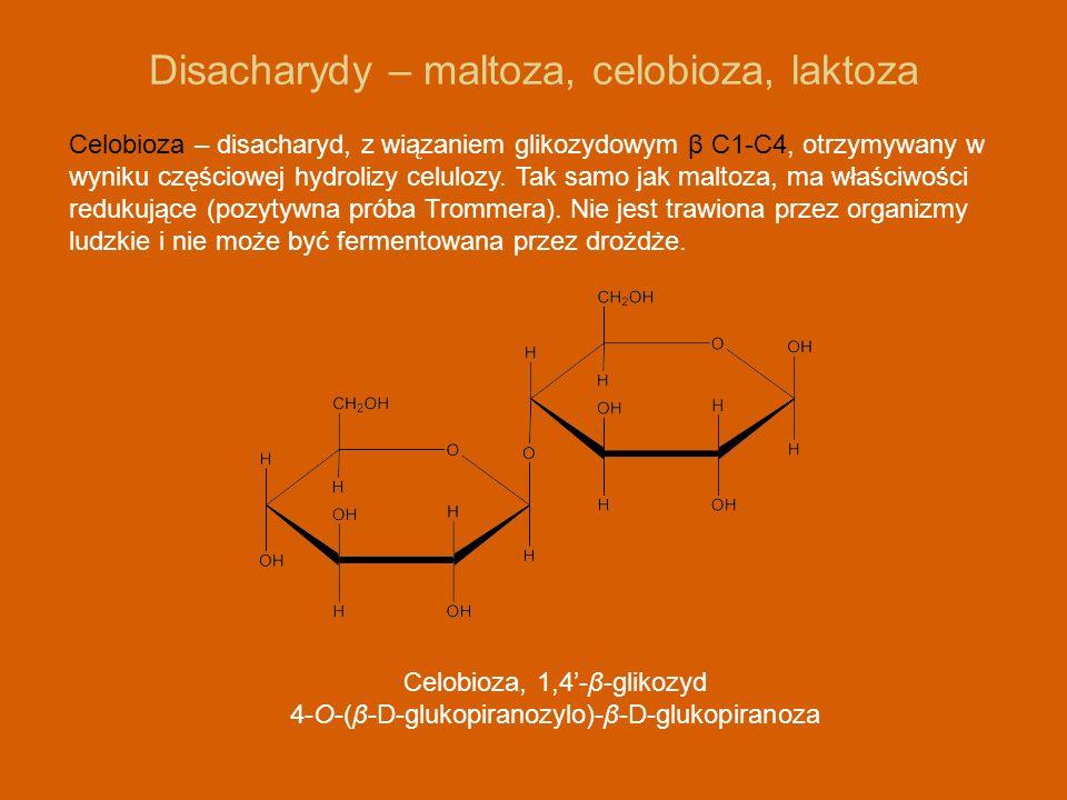 Disacharydy – maltoza, celobioza, laktoza Celobioza – disacharyd, z wiązaniem glikozydowym β C1-C4, otrzymywany w wyniku częściowej hydrolizy celulozy