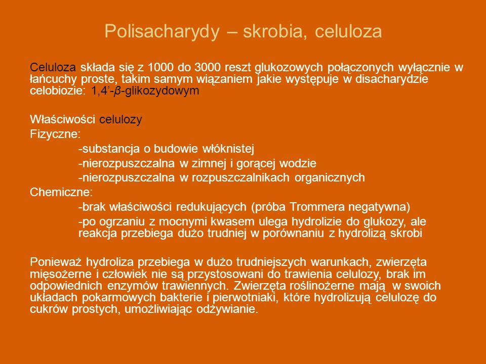 Polisacharydy – skrobia, celuloza Celuloza składa się z 1000 do 3000 reszt glukozowych połączonych wyłącznie w łańcuchy proste, takim samym wiązaniem