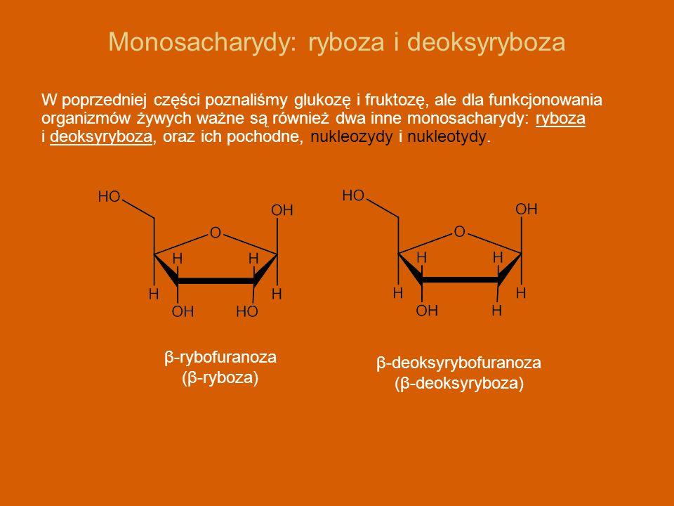 Nukleozydy i nukleotydy Ryboza i deoksyryboza tworzą nukleozydy z zasadami purynowymi i pirymidynowymi.