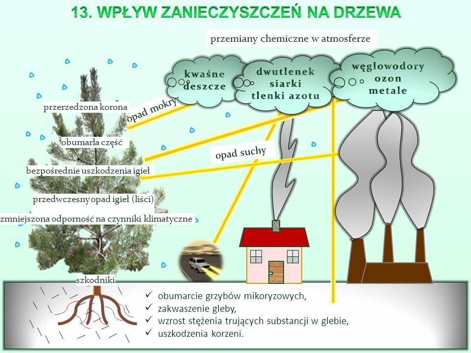 opad mokry obumarcie grzybów mikoryzowych, zakwaszenie gleby, wzrost stężenia trujących substancji w glebie, uszkodzenia korzeni. szkodniki przedwczes