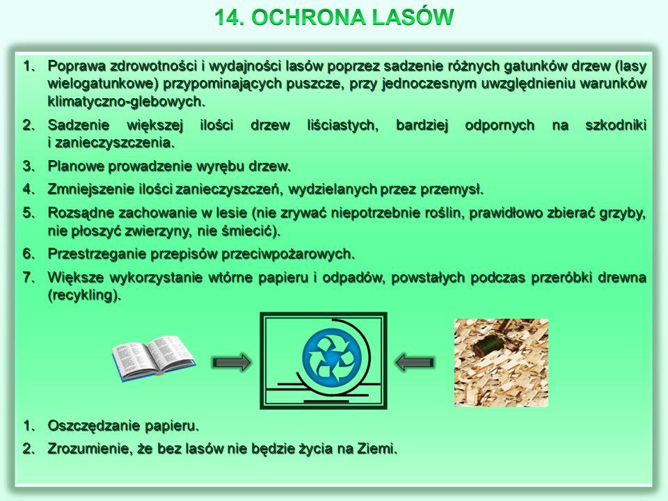 1.Poprawa zdrowotności i wydajności lasów poprzez sadzenie różnych gatunków drzew (lasy wielogatunkowe) przypominających puszcze, przy jednoczesnym uw