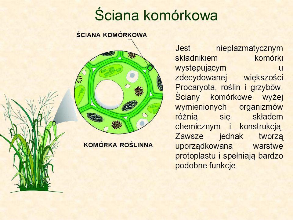 Jest nieplazmatycznym składnikiem komórki występującym u zdecydowanej większości Procaryota, roślin i grzybów. Ściany komórkowe wyżej wymienionych org
