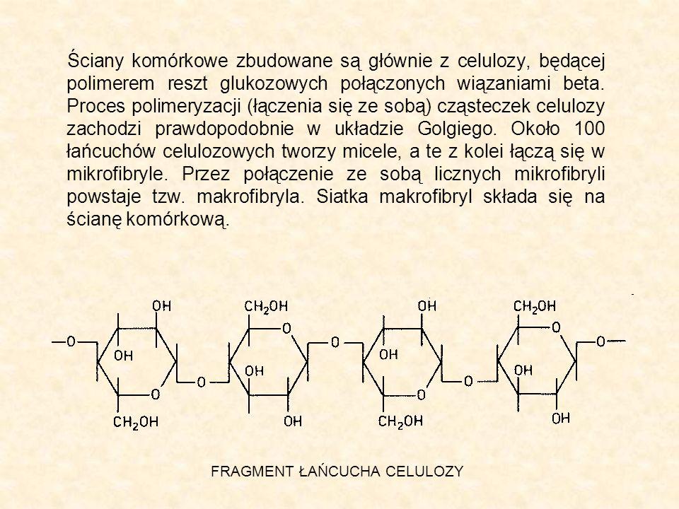 Ściany komórkowe zbudowane są głównie z celulozy, będącej polimerem reszt glukozowych połączonych wiązaniami beta. Proces polimeryzacji (łączenia się