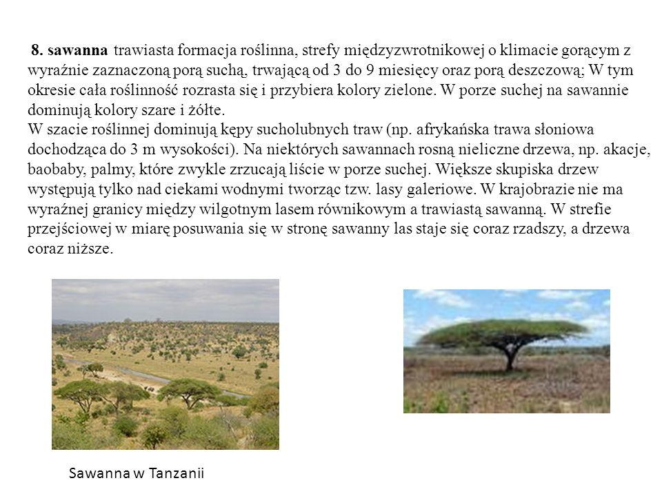 8. sawanna trawiasta formacja roślinna, strefy międzyzwrotnikowej o klimacie gorącym z wyraźnie zaznaczoną porą suchą, trwającą od 3 do 9 miesięcy ora