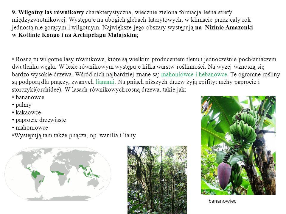 9. Wilgotny las równikowy charakterystyczna, wiecznie zielona formacja leśna strefy międzyzwrotnikowej. Występuje na ubogich glebach laterytowych, w k