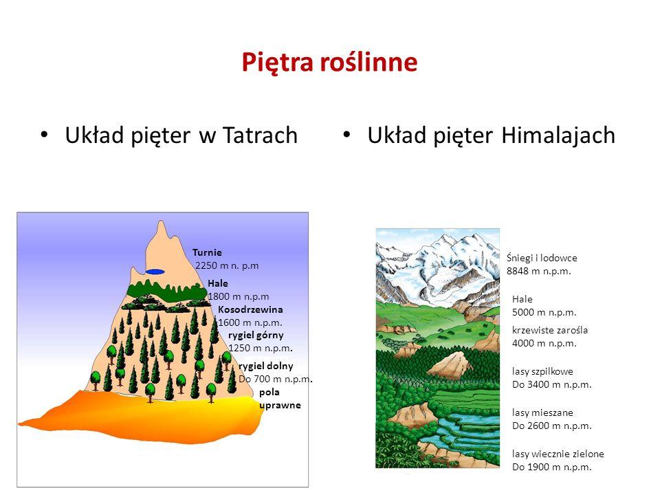 Piętra roślinne Układ pięter w Tatrach Układ pięter Himalajach Turnie 2250 m n.