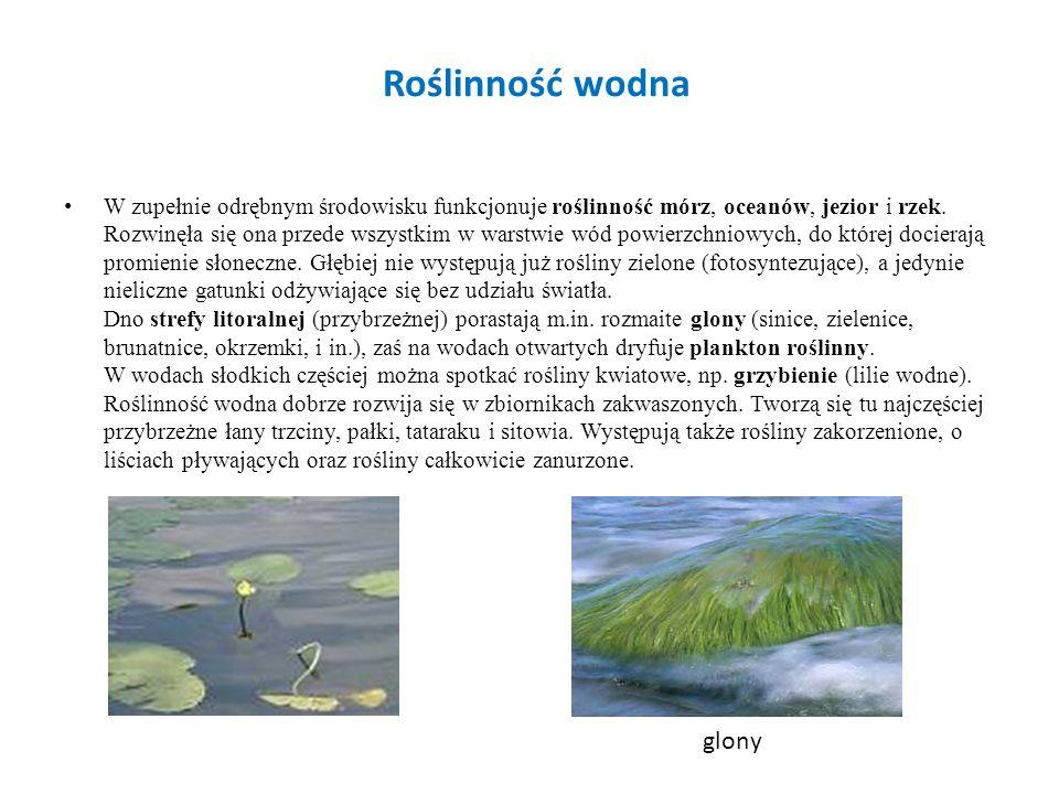 Roślinność wodna W zupełnie odrębnym środowisku funkcjonuje roślinność mórz, oceanów, jezior i rzek.