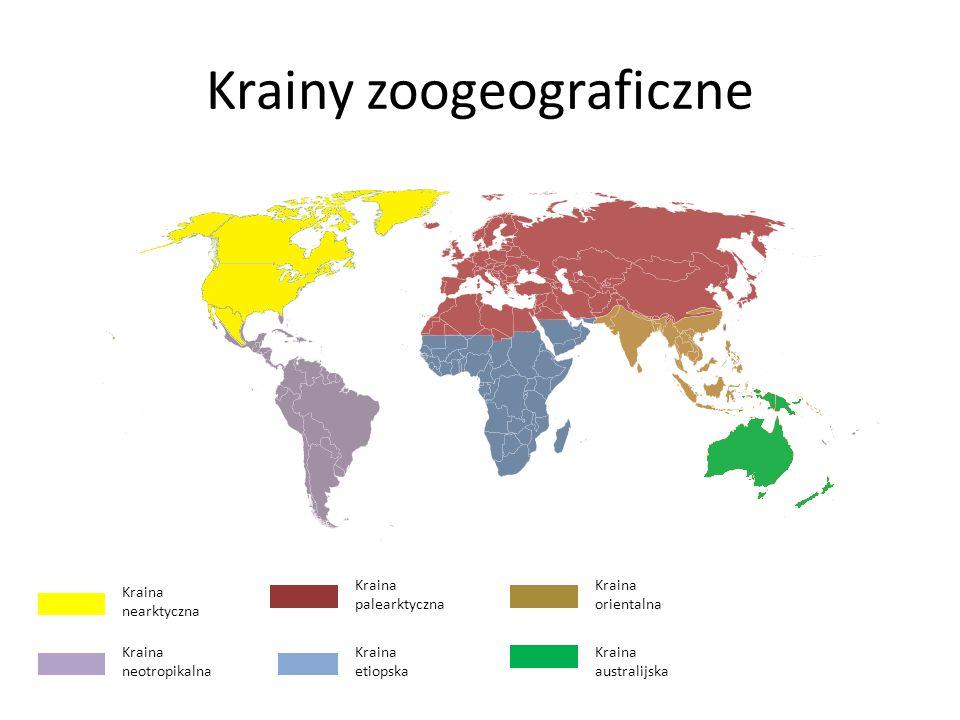 Krainy zoogeograficzne Kraina nearktyczna Kraina neotropikalna Kraina palearktyczna Kraina etiopska Kraina orientalna Kraina australijska