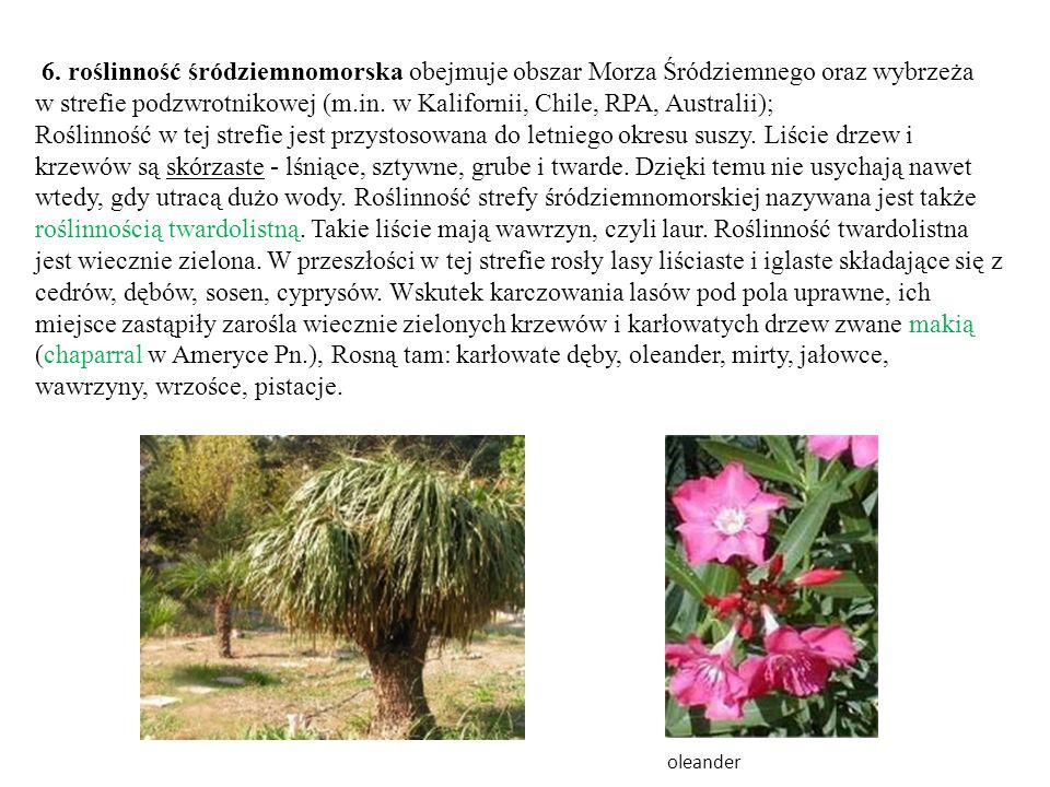 6. roślinność śródziemnomorska obejmuje obszar Morza Śródziemnego oraz wybrzeża w strefie podzwrotnikowej (m.in. w Kalifornii, Chile, RPA, Australii);