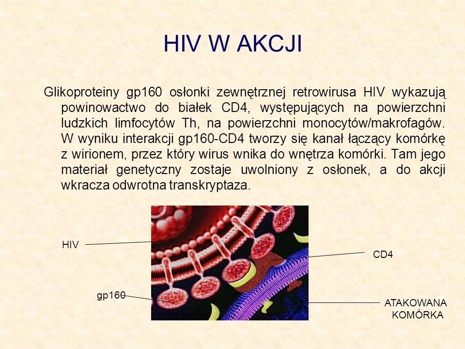 HIV W AKCJI Glikoproteiny gp160 osłonki zewnętrznej retrowirusa HIV wykazują powinowactwo do białek CD4, występujących na powierzchni ludzkich limfocy
