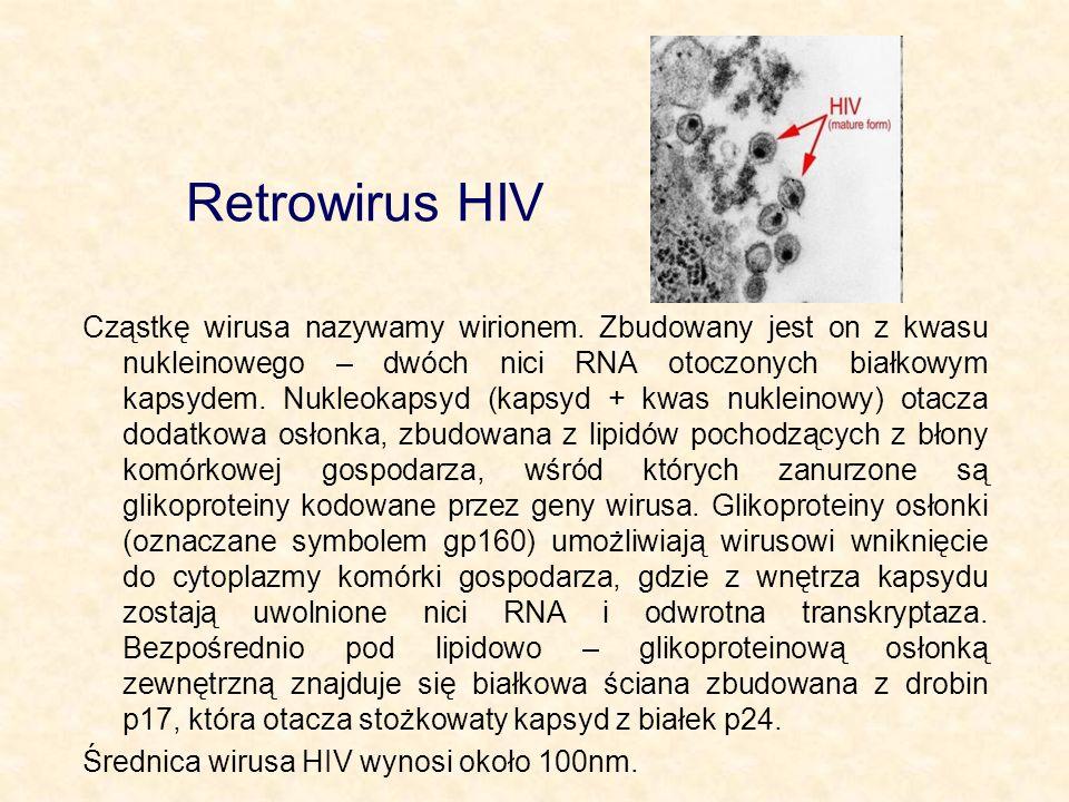 Retrowirus HIV Cząstkę wirusa nazywamy wirionem. Zbudowany jest on z kwasu nukleinowego – dwóch nici RNA otoczonych białkowym kapsydem. Nukleokapsyd (