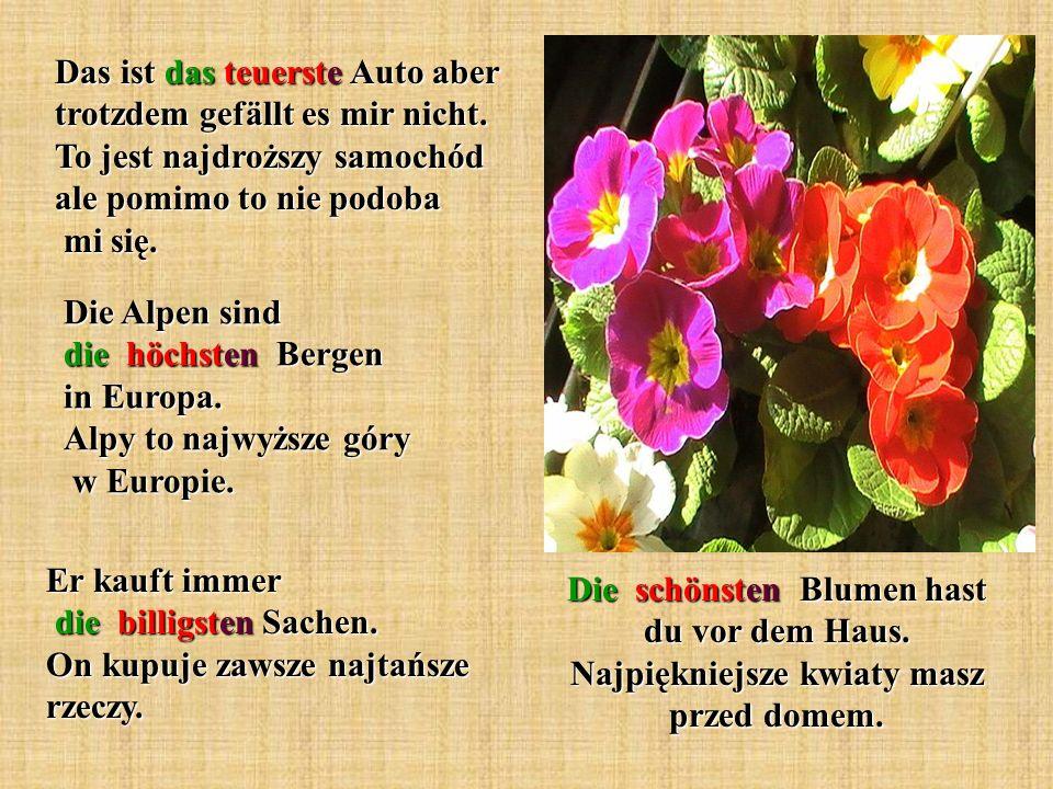 Die schönsten Blumen hast du vor dem Haus.Najpiękniejsze kwiaty masz przed domem.