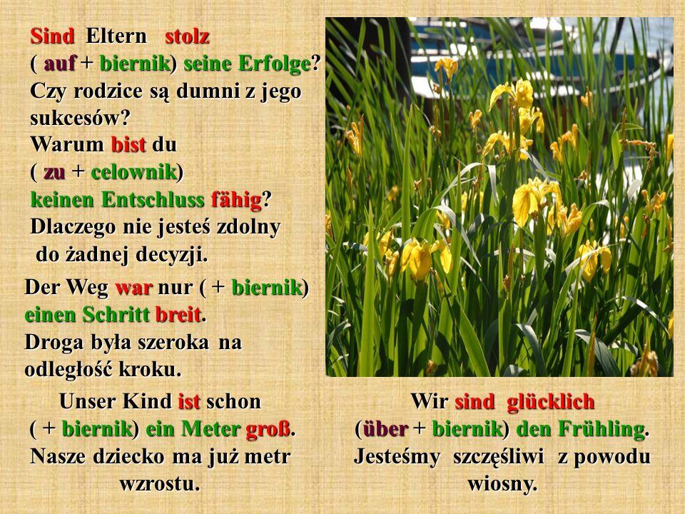 Wir sind glücklich (über + biernik) den Frühling.Jesteśmy szczęśliwi z powodu wiosny.