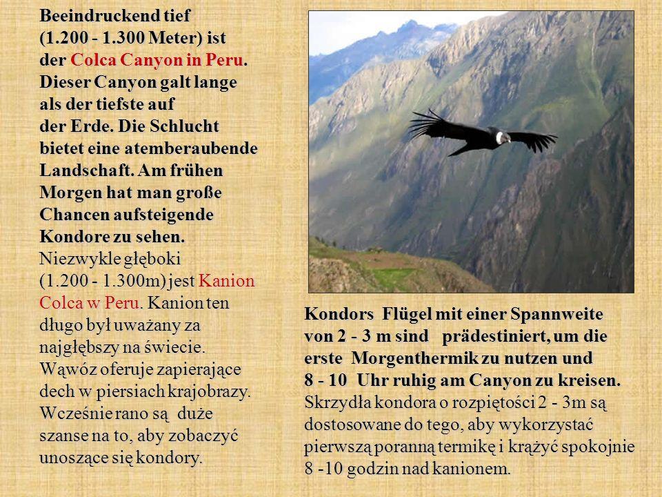 Beeindruckend tief (1.200 - 1.300 Meter) ist der Colca Canyon in Peru. Dieser Canyon galt lange als der tiefste auf der Erde. Die Schlucht bietet eine
