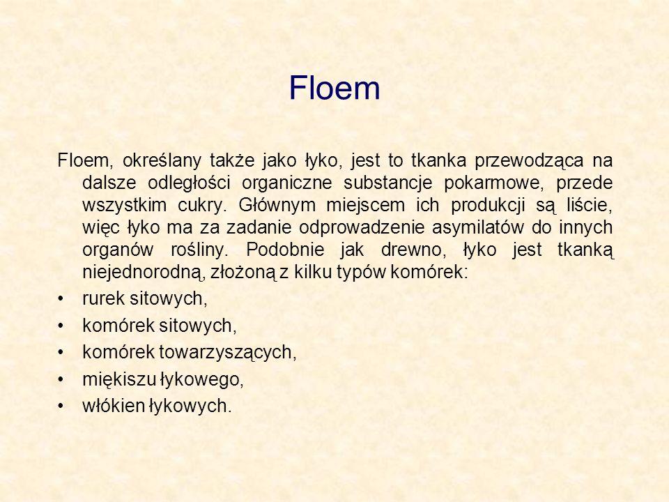 Floem Floem, określany także jako łyko, jest to tkanka przewodząca na dalsze odległości organiczne substancje pokarmowe, przede wszystkim cukry. Główn