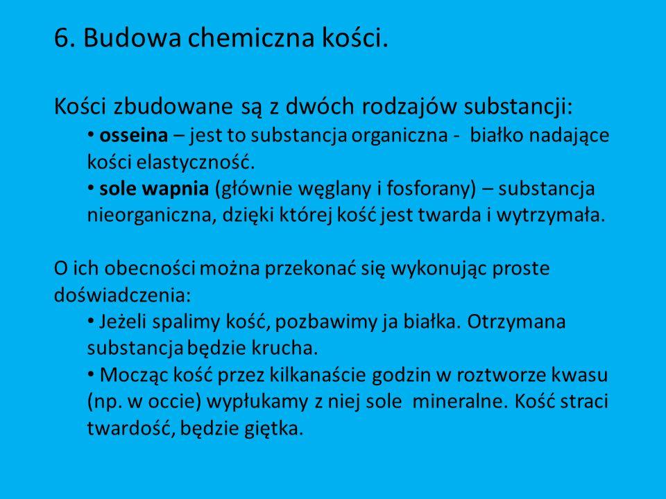 6.Budowa chemiczna kości.