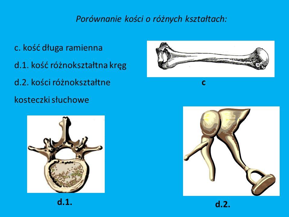 Porównanie kości o różnych kształtach: d.1.d.2. c c.