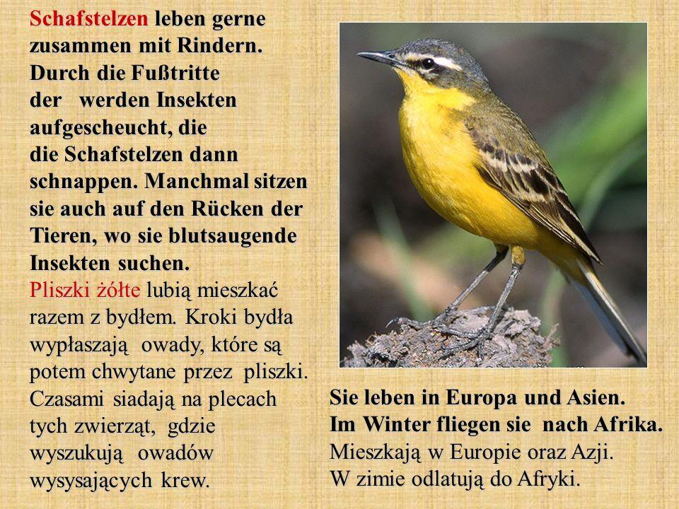 Der Zaunkönig ist einer der kleinsten Vögel Mitteleuropas.
