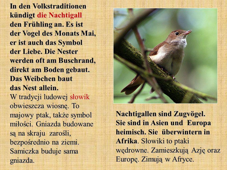 der Kleiber - kowalik in der Baumrinde - w korze drzew die Feldlerche - skowronek polny die Fußtritte - kroki blutsaugende Insekten - owady wysysające krew der Zaunkönig - strzyżyk sie leben am Boden - żyją na ziemi gut versteckt - dobrze schowany der Pirol - wilga die Nachtigall - słowik die Zugvögel - ptaki wędrowne Wörter und Wendungen.