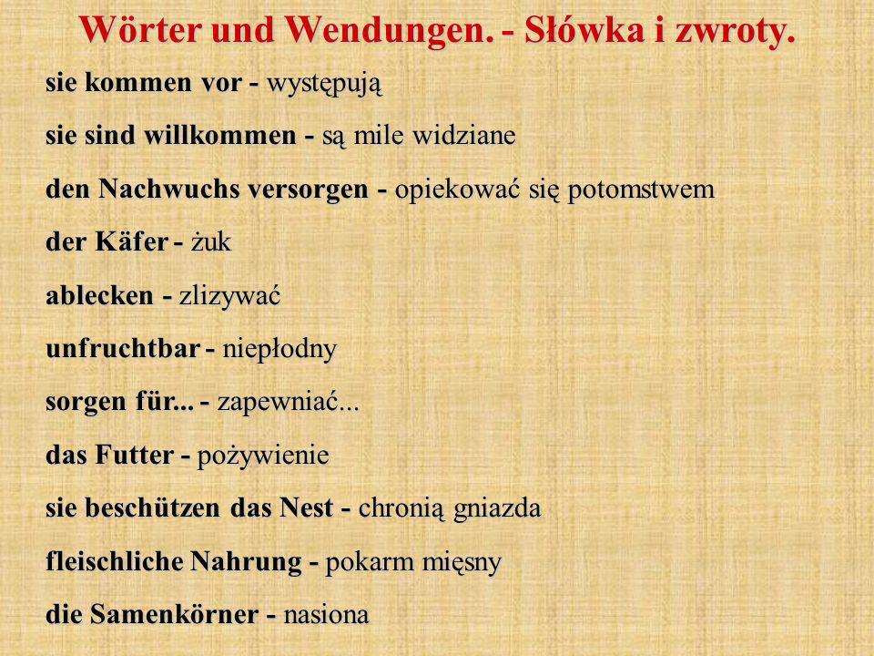 sie kommen vor - występują sie sind willkommen - są mile widziane den Nachwuchs versorgen - opiekować się potomstwem der Käfer - żuk ablecken - zlizyw