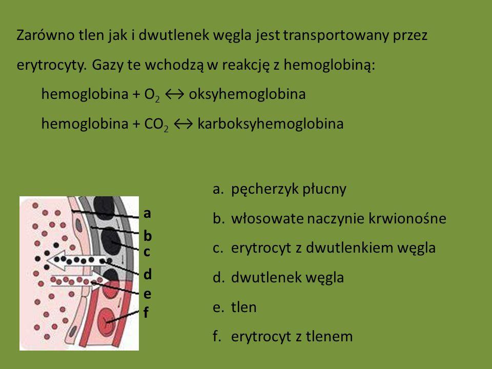 a d e f b c a.pęcherzyk płucny b.włosowate naczynie krwionośne c.erytrocyt z dwutlenkiem węgla d.dwutlenek węgla e.tlen f.erytrocyt z tlenem Zarówno tlen jak i dwutlenek węgla jest transportowany przez erytrocyty.