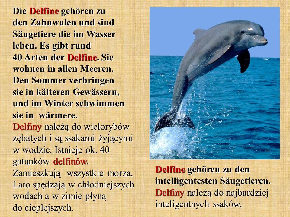 Die Delfine gehören zu den Zahnwalen und sind Säugetiere die im Wasser leben. Es gibt rund 40 Arten der Delfine. Sie wohnen in allen Meeren. Den Somme