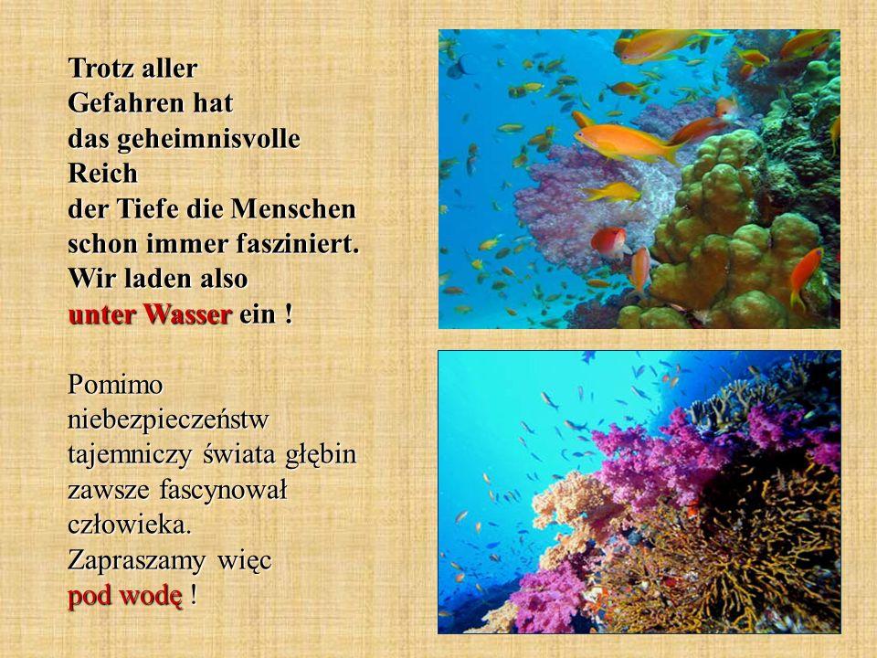 Die Korallen bestehen aus unzähligen, winzigen, wirbellosen Tierchen, den Korallenpolypen.
