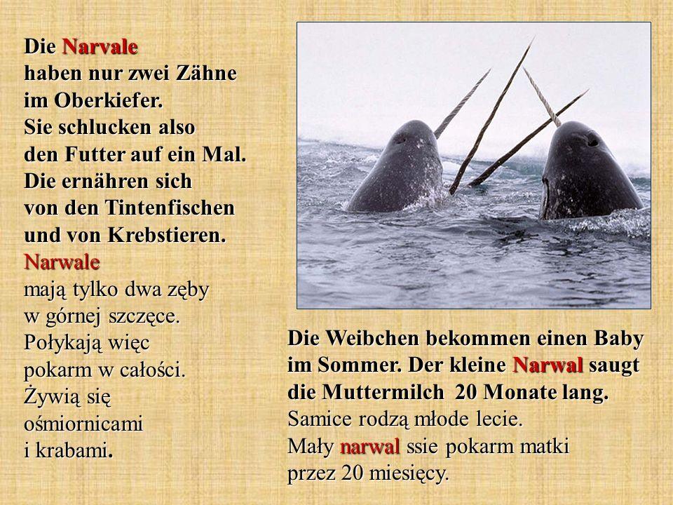 Die Delfine gehören zu den Zahnwalen und sind Säugetiere die im Wasser leben.
