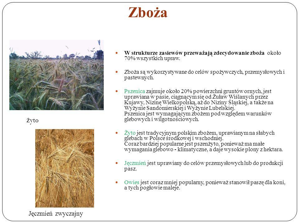 Zboża W strukturze zasiewów przeważają zdecydowanie zboża około 70% wszystkich upraw. Zboża są wykorzystywane do celów spożywczych, przemysłowych i pa