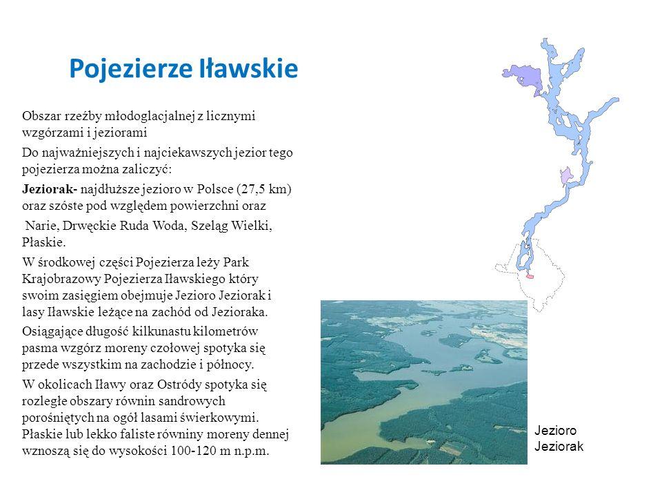 Pojezierze Iławskie Obszar rzeźby młodoglacjalnej z licznymi wzgórzami i jeziorami Do najważniejszych i najciekawszych jezior tego pojezierza można za