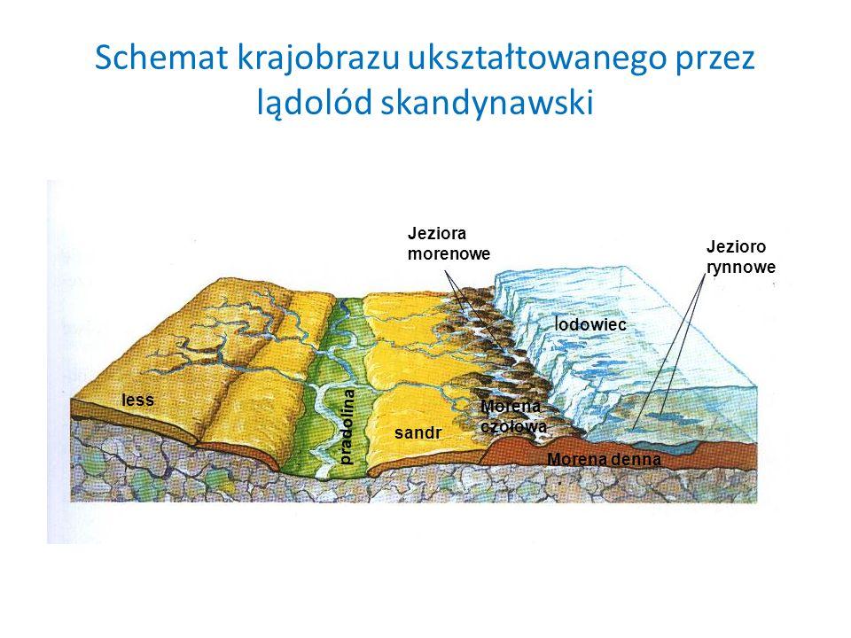 Schemat krajobrazu ukształtowanego przez lądolód skandynawski Jezioro rynnowe l odowiec Jeziora morenowe Morena czołowa sandr pradolina less Morena de