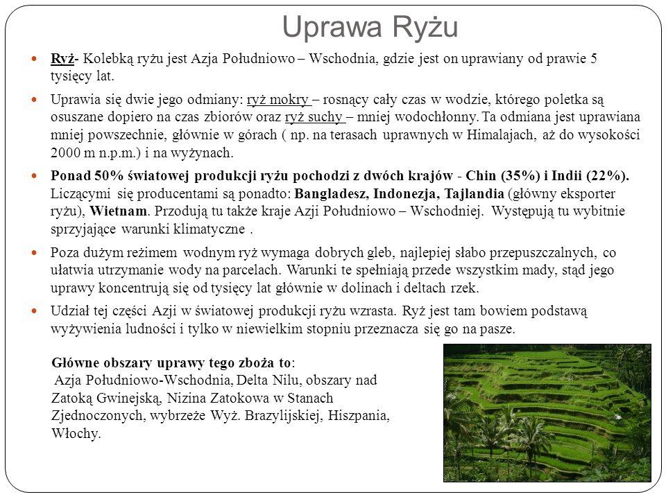 Uprawa Ryżu Ryż- Kolebką ryżu jest Azja Południowo – Wschodnia, gdzie jest on uprawiany od prawie 5 tysięcy lat. Uprawia się dwie jego odmiany: ryż mo