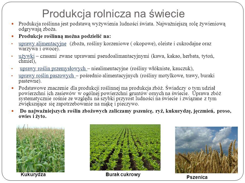 Produkcja rolnicza na świecie Produkcja roślinna jest podstawą wyżywienia ludności świata. Najważniejszą rolę żywieniową odgrywają zboża. Produkcje ro