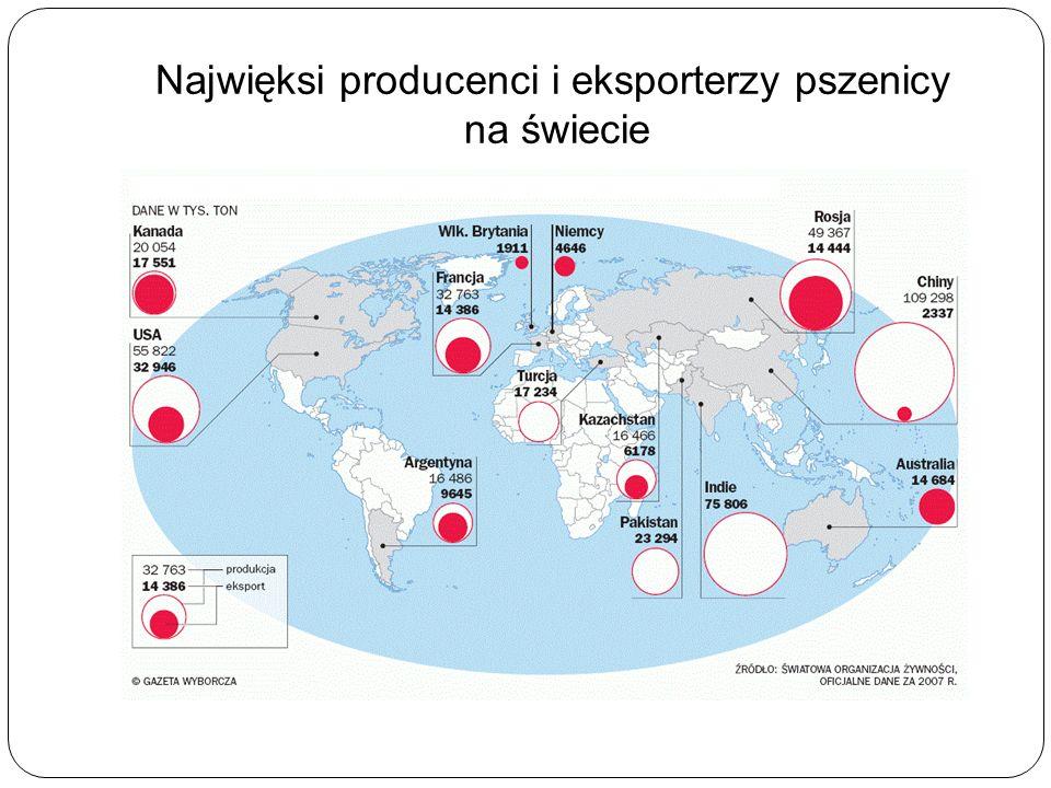 Najwięksi producenci i eksporterzy pszenicy na świecie