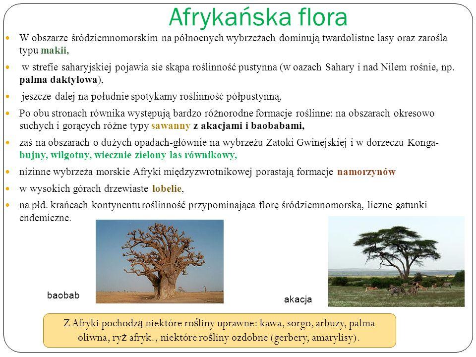 Afrykańska flora W obszarze śródziemnomorskim na północnych wybrzeżach dominują twardolistne lasy oraz zarośla typu makii, w strefie saharyjskiej poja