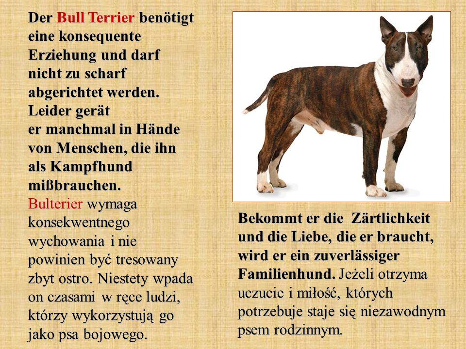 Der Bernhardiner ist ein großer und kräftiger Hund.