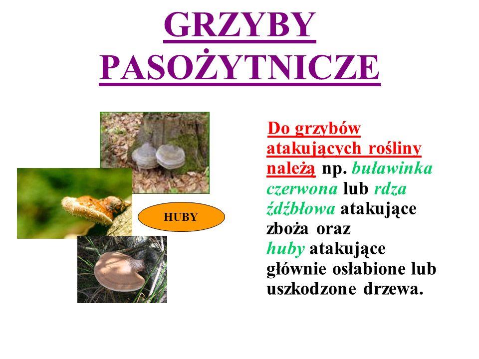 GRZYBY PASOŻYTNICZE Do grzybów atakujących rośliny należą np.