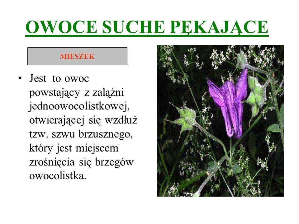 OWOCE SUCHE PĘKAJĄCE Jest to owoc powstający z zalążni jednoowocolistkowej, otwierającej się wzdłuż tzw. szwu brzusznego, który jest miejscem zrośnięc