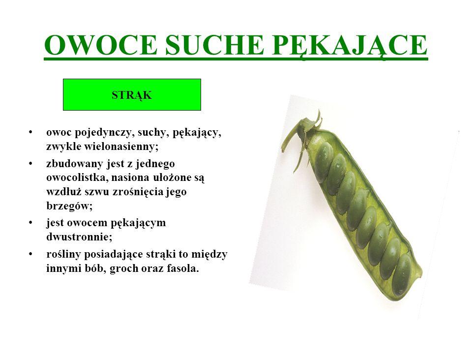 OWOCE SUCHE PĘKAJĄCE owoc pojedynczy, suchy, pękający, zwykle wielonasienny; zbudowany jest z jednego owocolistka, nasiona ułożone są wzdłuż szwu zroś