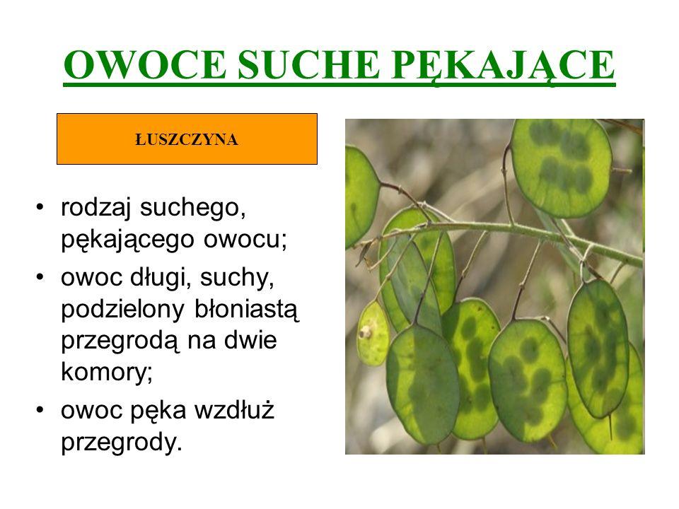 OWOCE SUCHE PĘKAJĄCE rodzaj suchego, pękającego owocu; owoc długi, suchy, podzielony błoniastą przegrodą na dwie komory; owoc pęka wzdłuż przegrody. Ł