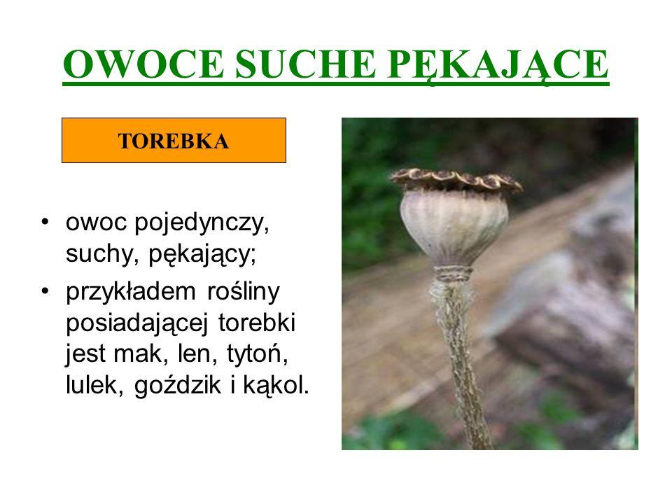 OWOCE SUCHE PĘKAJĄCE owoc pojedynczy, suchy, pękający; przykładem rośliny posiadającej torebki jest mak, len, tytoń, lulek, goździk i kąkol. TOREBKA