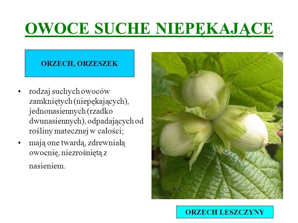 OWOCE SUCHE NIEPĘKAJĄCE rodzaj suchych owoców zamkniętych (niepękających), jednonasiennych (rzadko dwunasiennych), odpadających od rośliny matecznej w