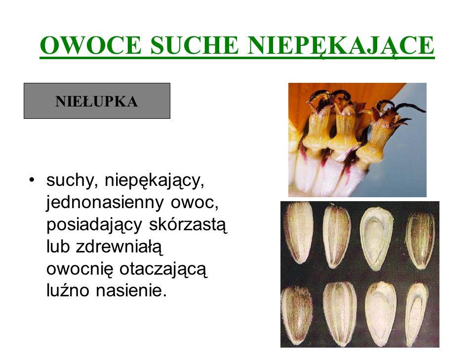 OWOCE SUCHE NIEPĘKAJĄCE suchy, niepękający, jednonasienny owoc, posiadający skórzastą lub zdrewniałą owocnię otaczającą luźno nasienie. NIEŁUPKA
